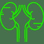 two-kidneys